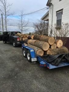 East Coast Lumberjack 2